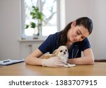 Stock photo veterinary surgeon and chihuahua dog at vet clinic 1383707915