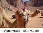 camels or dromedary in the... | Shutterstock . vector #1383752585