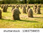 Lots Of Hay Stacks On Poles...