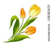 Tulip Bouquet Isolated Over...