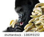 Big Hungry Gorilla Eating A...