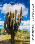 old cactus at north argentina. | Shutterstock . vector #1384038125