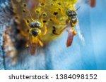 Stingless bees flying around the nest, Stingless bees on nest hole, blue background, Apinae, Brazil