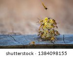 Stingless bees flying around the nest, Stingless bees on nest hole, brown background, Apinae, Brazil