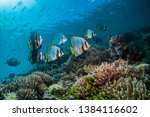 Wide Angle Underwater Shot Of ...