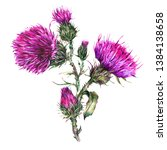 Watercolor Thistle  Wild...