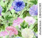 beautiful ipomoea  morning... | Shutterstock . vector #1384241585