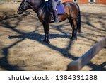 horse animal equestrian rider... | Shutterstock . vector #1384331288