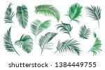 set of various palm leaves....   Shutterstock .eps vector #1384449755