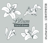 set collection of white lilium...   Shutterstock .eps vector #1384598558