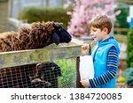 little school kid boy feeding... | Shutterstock . vector #1384720085