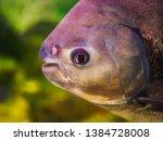 bright tropical fish swim in... | Shutterstock . vector #1384728008