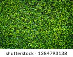 green leaves nature wall... | Shutterstock . vector #1384793138