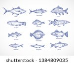 Stock vector hand drawn ocean sea river and lake fishes set a collection of salmon and tuna or pike and 1384809035