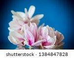 spring beautiful blooming... | Shutterstock . vector #1384847828