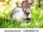 Stock photo white and brown rabbit sitting in grass smiling at camera 138488276
