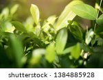 blurred image of nature view  ... | Shutterstock . vector #1384885928