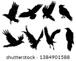 Set Of Ravens. A Collection Of...