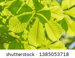 close up of green leaves at... | Shutterstock . vector #1385053718