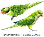 Parrot Bird On An Isolated...
