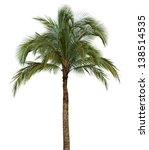 coconut palm tree isolated on... | Shutterstock . vector #138514535