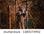 Cat Climbs Over The Fence ...