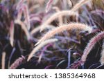 beautiful spring background of... | Shutterstock . vector #1385364968