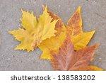 Autumn Leaves On Concrete Path