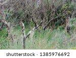 Detail Of Vegetation In The...