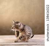 Small kitten sitting on old wooden floor scratching - stock photo