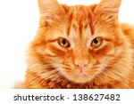 Stock photo red cat lying and posing at studio closeup portrait on white background 138627482