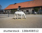 White Speckled Horse Standing...
