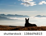 Stock photo a black dog in the mountains sits against the backdrop of a beautiful sunrise silhouette space 1386696815