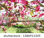 apple blossom. beautiful pink... | Shutterstock . vector #1386911345