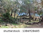 stony glade in the forest on... | Shutterstock . vector #1386928685