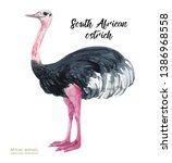 Watercolor Realistic Ostrich...