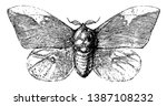 imperial moth is an insect in... | Shutterstock .eps vector #1387108232