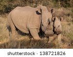 Portrait Of Two White Rhinos ...