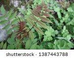 green vegetation in the forest  ... | Shutterstock . vector #1387443788