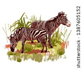 Two Zebras Standing In The...