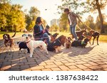 Stock photo professional dog walker in the street with lots of dogs 1387638422