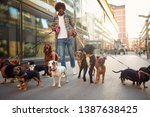 Stock photo smiling professional dog walker man in the street with lots of dogs 1387638425