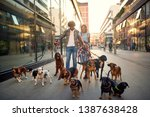 Stock photo smiling professional couple dog walker in the street with lots of dogs 1387638428