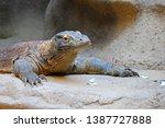 the komodo dragon  also known...   Shutterstock . vector #1387727888