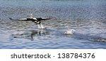 australian pelican in flight... | Shutterstock . vector #138784376