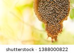 Honeycomb On Tree Nature And...