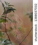 Spider Web With Dew Drops On...