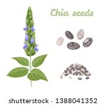 chia plant and seeds isolated... | Shutterstock .eps vector #1388041352