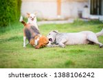 three dogs playing on a green... | Shutterstock . vector #1388106242