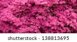 Panorama Of Pink Azaleas In The ...